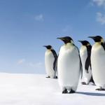 Tangguhnya Pinguin di Hutan Kami